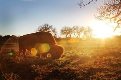 Sunset Buffalo