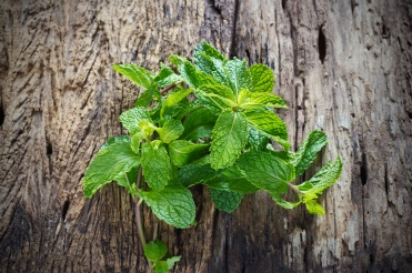 Fresh mint on old wooden background
