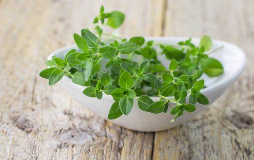 Fresh thyme in a white bowl closeup