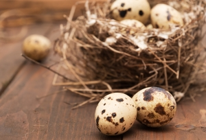 Quails Eggs and straw nest on a wooden background